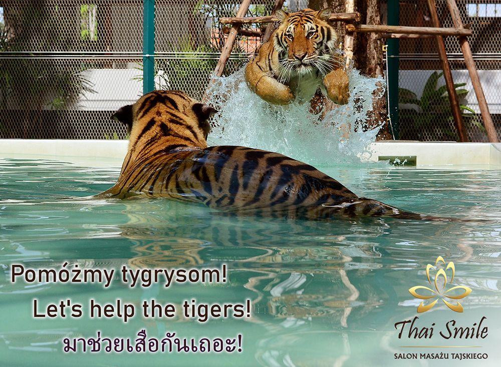 Działalność charytatywna Thai Smile 2019.10.30 - Pomoc Tygrysom